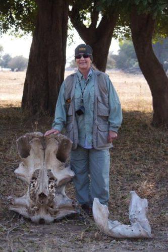 African Skull, Mana Pools, Zimbabwe, Africa