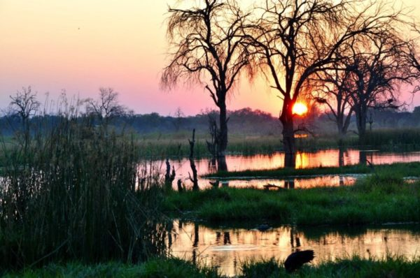 Photoing at sunset , Linyanti Marsh, Botswana