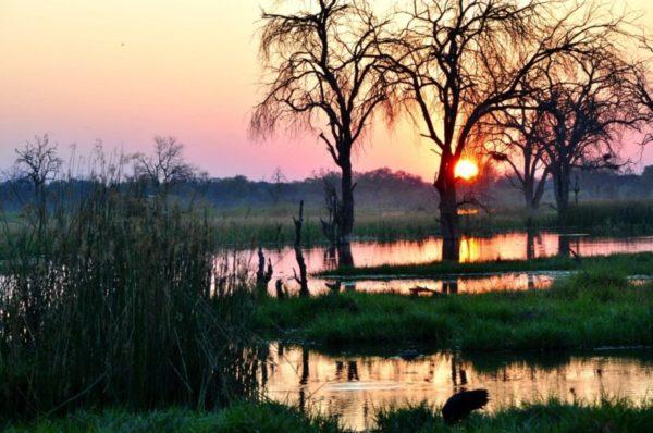 Photoing at sunset , Linyanti Marsh, Botswana