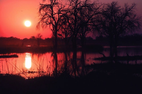Sunset along the Zambezi River, Zimbabwe, Africa