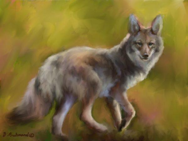 Coyote Crazy